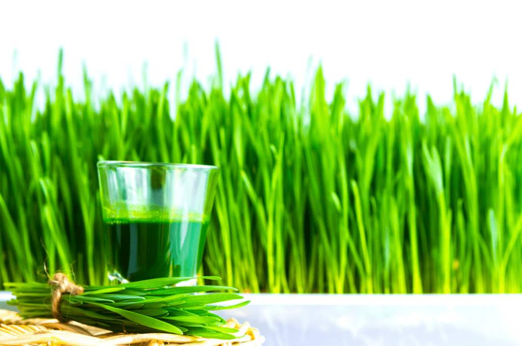 Energetic Lifestyle – Best wheatgrass Juicer