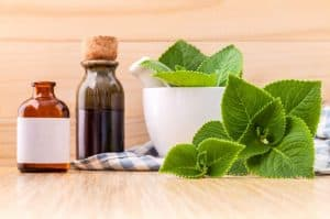 Gamma Linolenic Acid (Gla) Foods